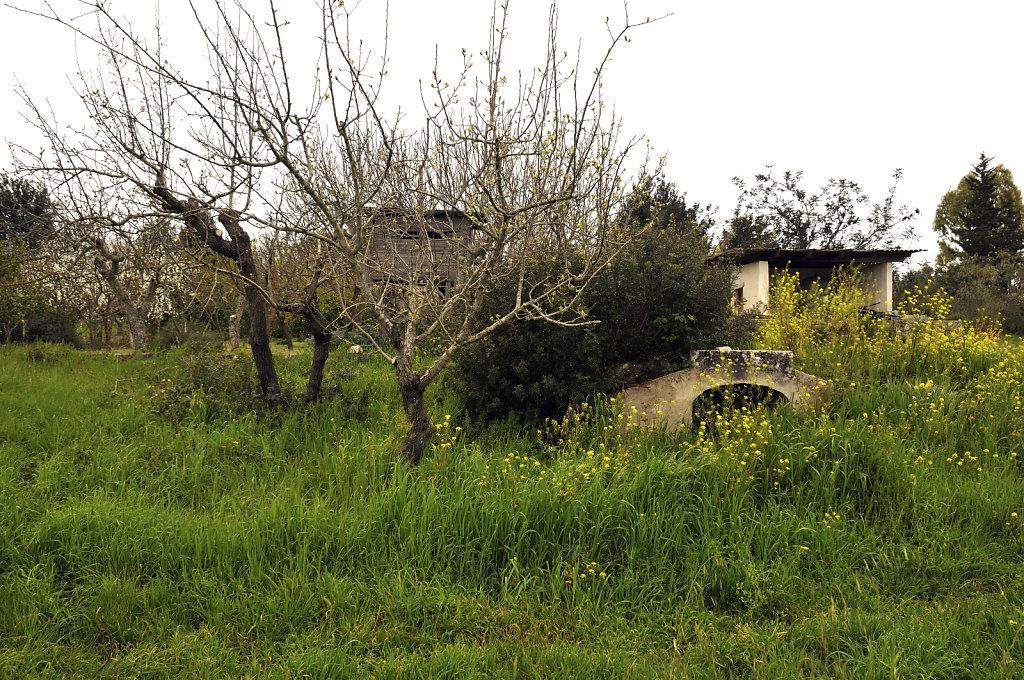 unterhalb des Obstgartens - urupia 2015 (26)