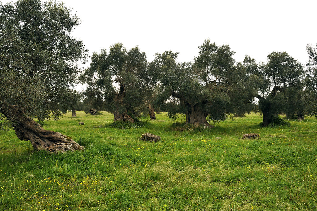 olivenhain – teil 4 - urupia 2015 (47)