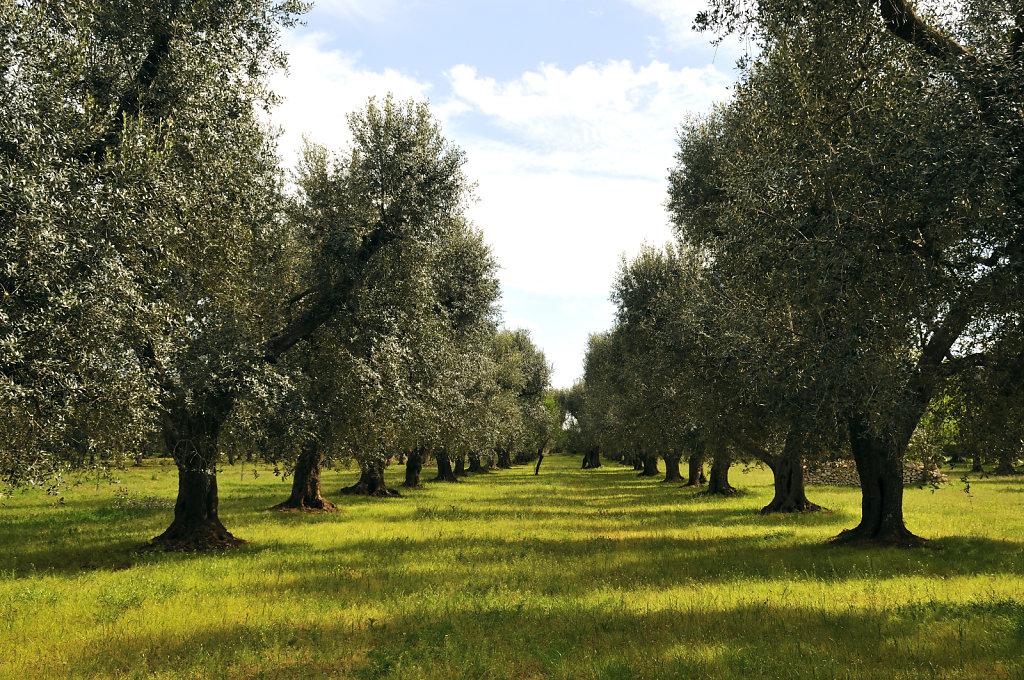 beim nachbarn - olivenhain - urupia 2015 (43)