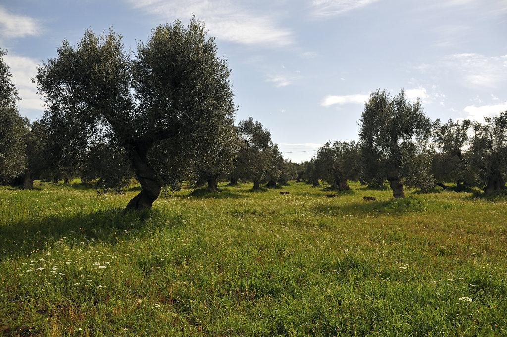 olivenhain – teil 3 - urupia 2015 (42)