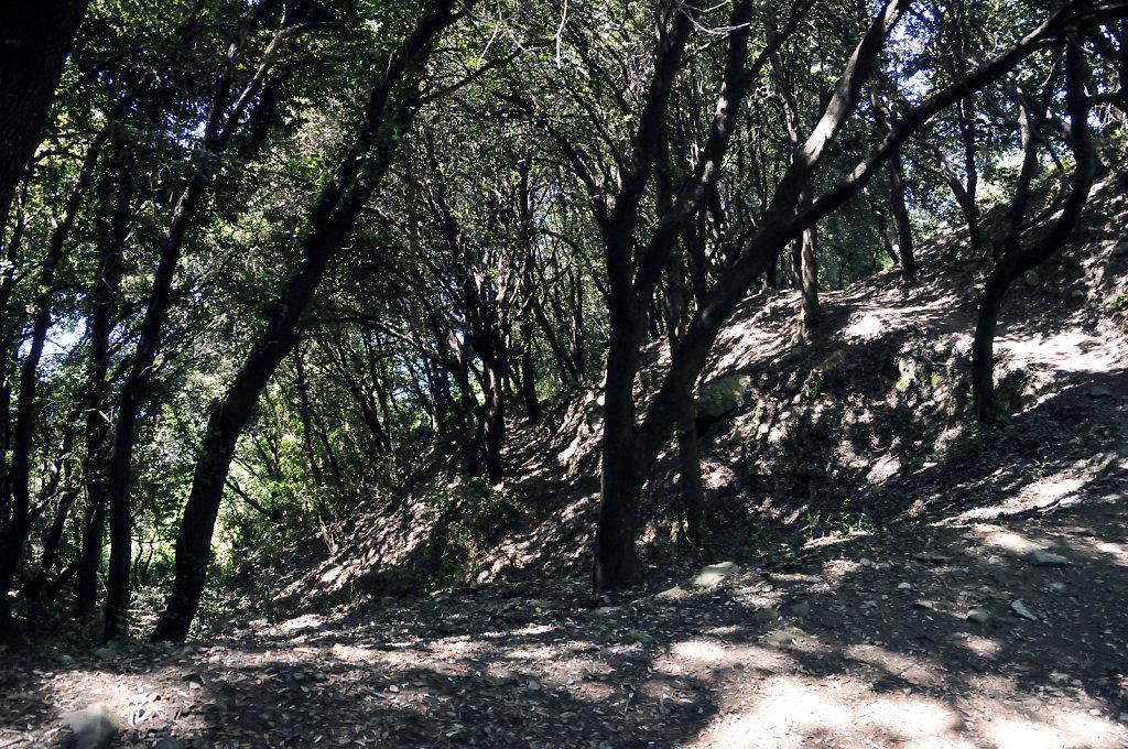 cinque terre – zwischen levanto und monterosso - im wald teil