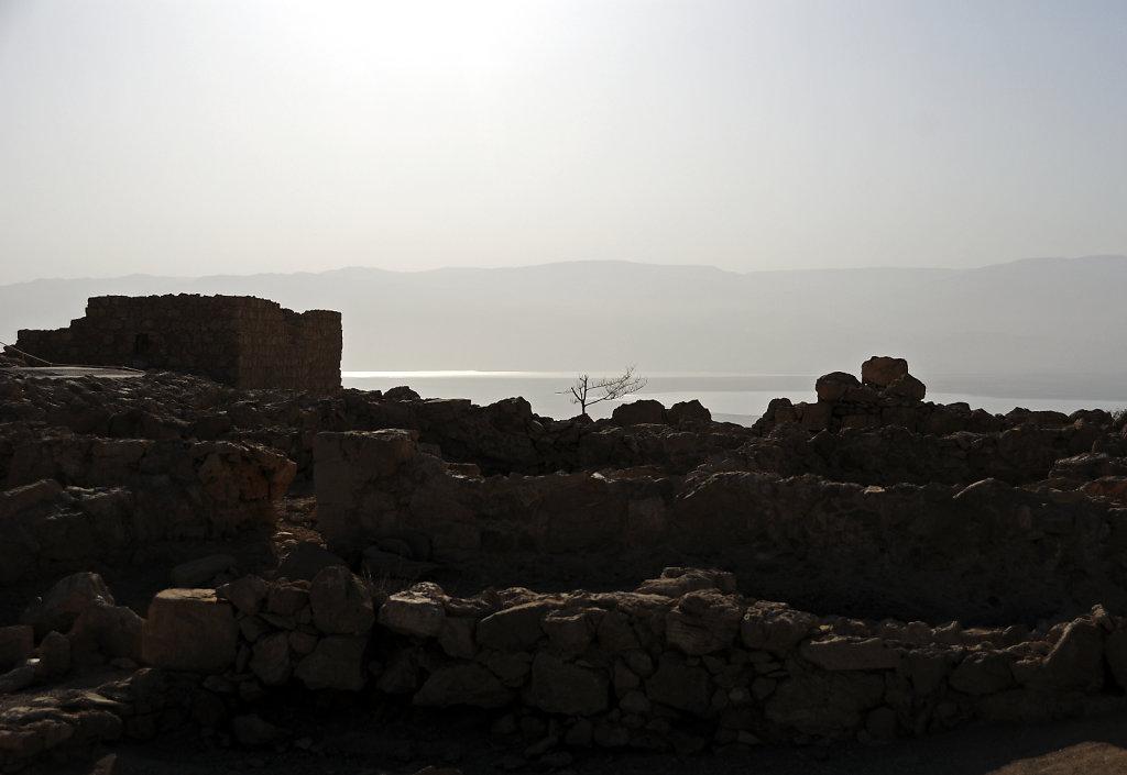 israel- totes meer - masada  – der baum