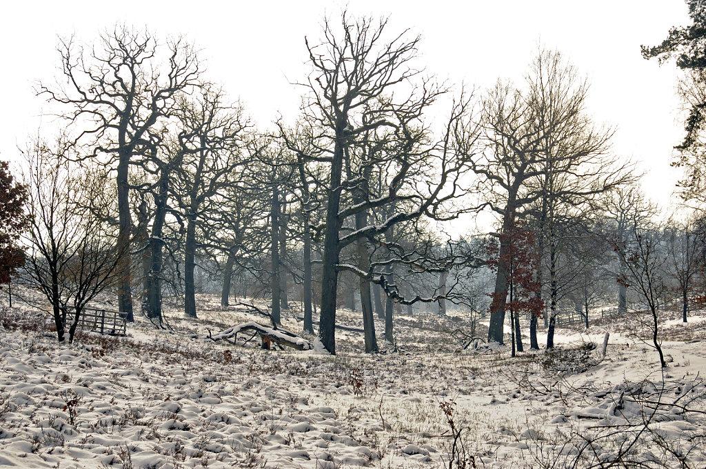 wendland - breeser grund -  bild nr. 05