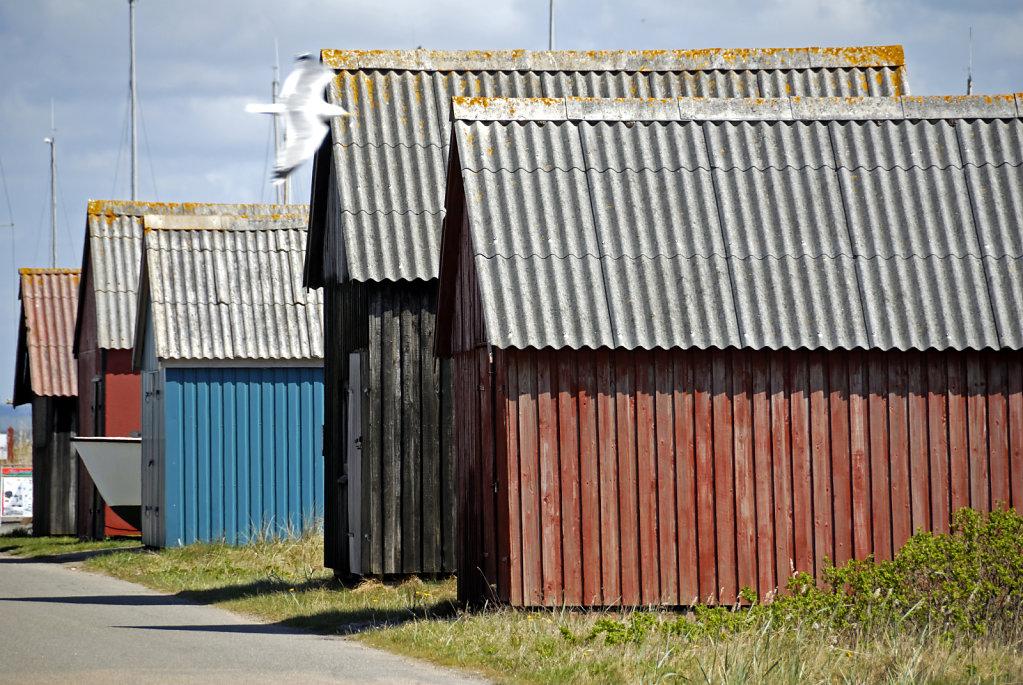 dänemark - ringkobing fjord  - hvide sande (17)
