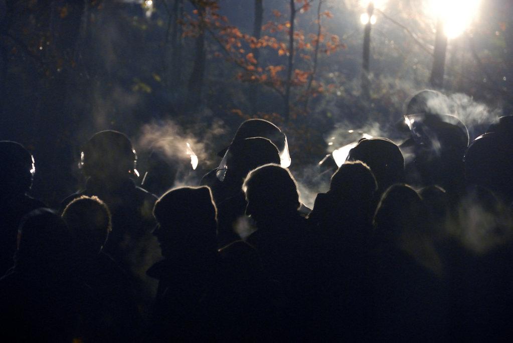 castor november 2010 –   harlingen (02)