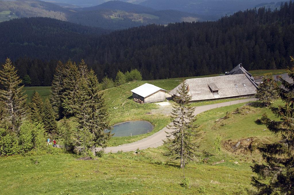 schwarzwald (5)
