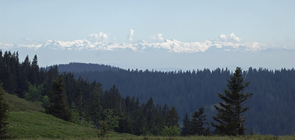 schwarzwald (7) - fernblick