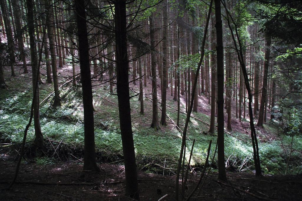 schwarzwald (17)  - im wald