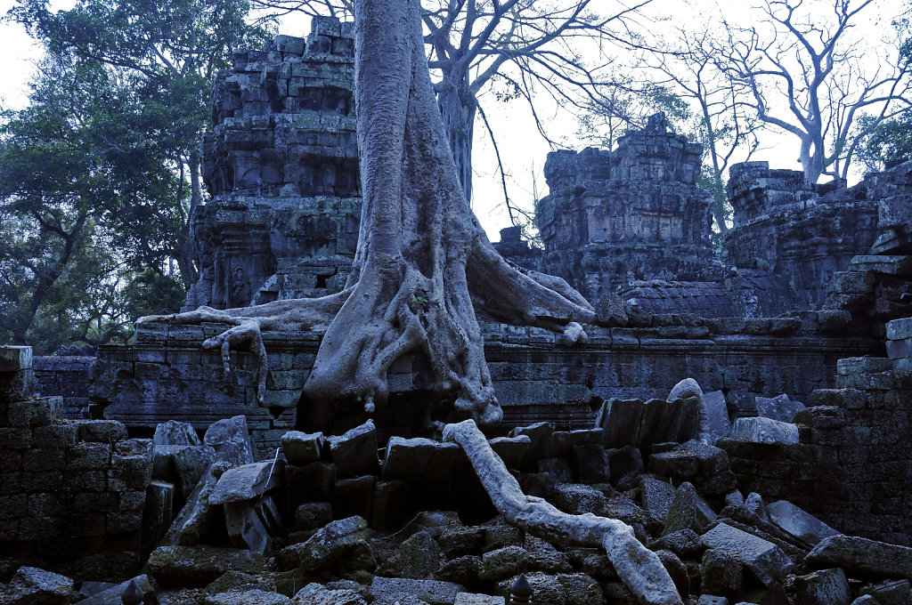 kambodscha - tempel von anghor - ta prohm (24)