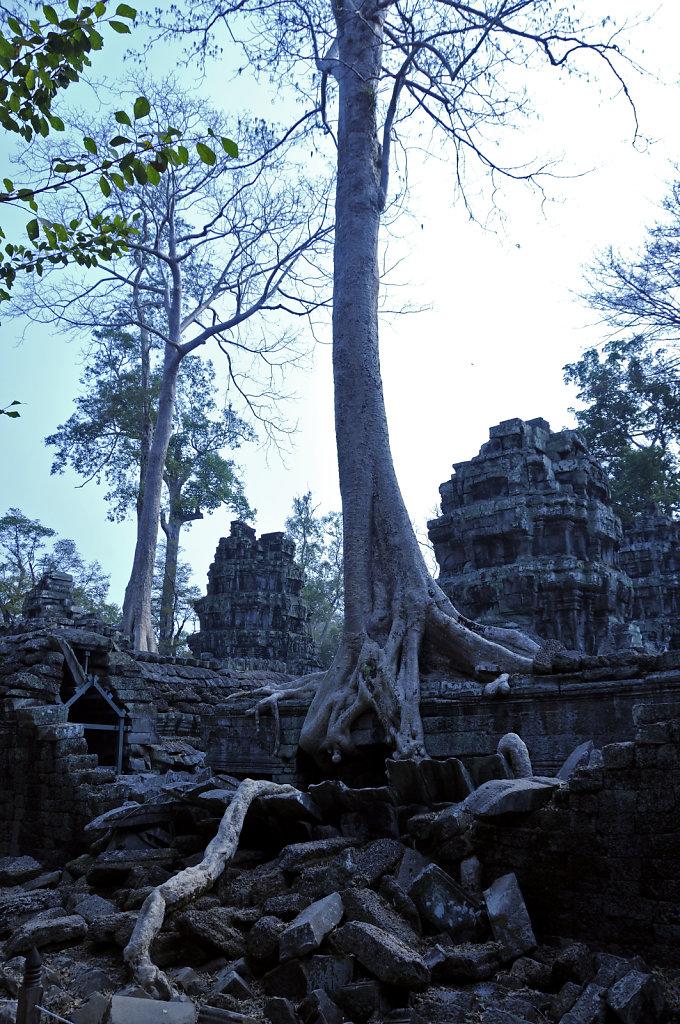 kambodscha - tempel von anghor - ta prohm (25)