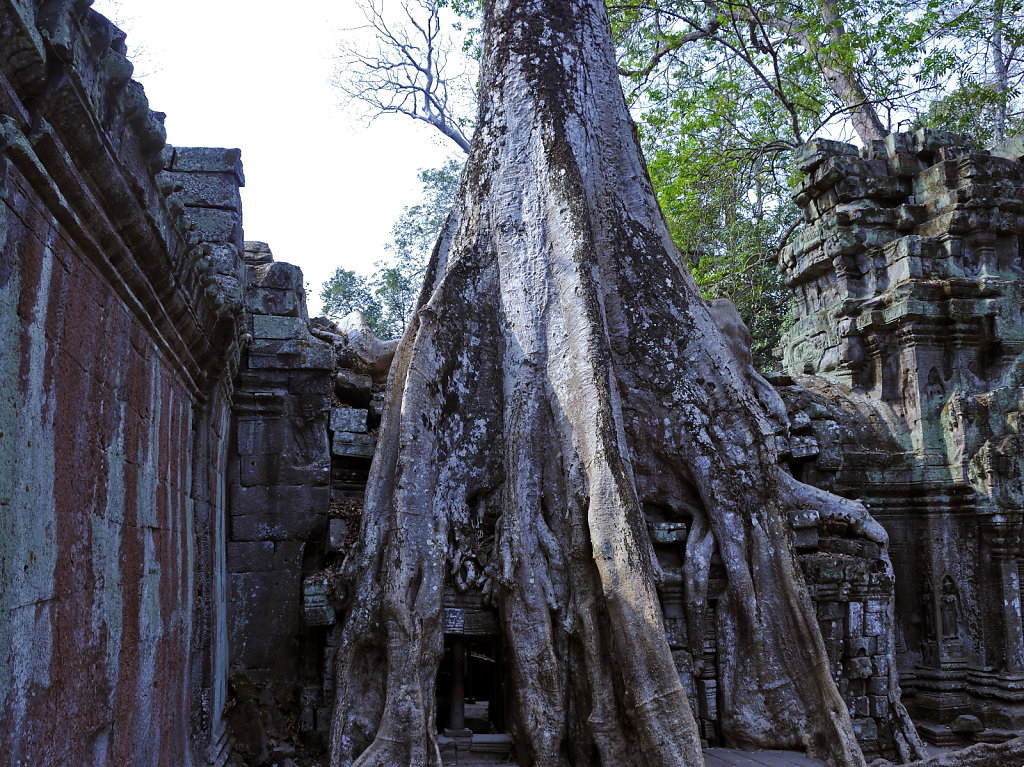 kambodscha - tempel von anghor - ta prohm (33)
