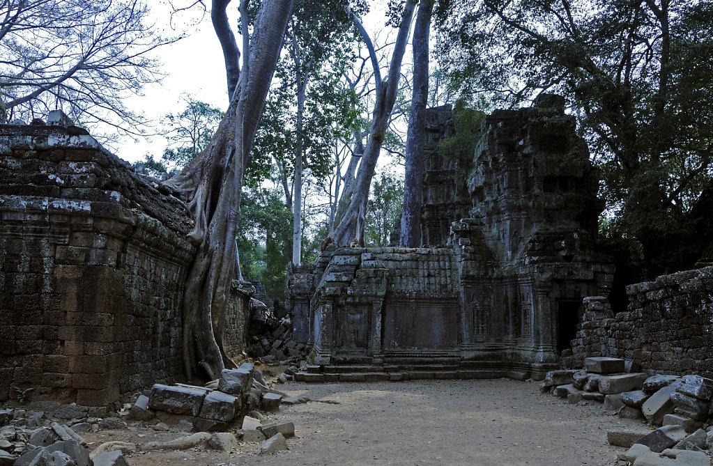 kambodscha - tempel von anghor - ta prohm (51)