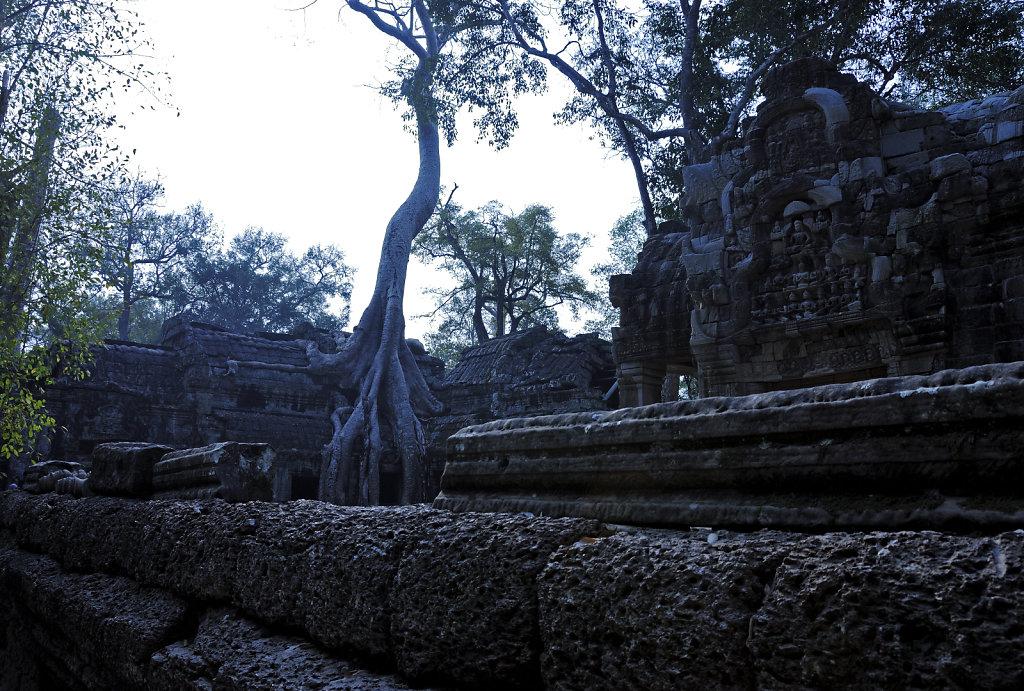 kambodscha - tempel von anghor - ta prohm (15)
